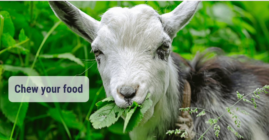 a goat with green leafs in its mounth and caption 'Chew your food'